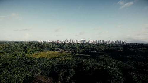 An Urban Forest By The City