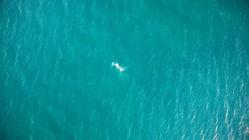 Aerial Shot Of Person Swimming