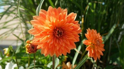 Orange Flowers In Bloom
