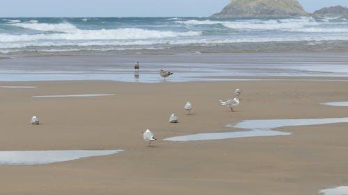Sea Gulls On The Shore