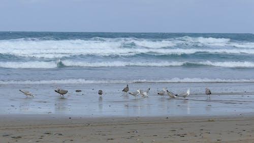 Sea Gulls By The Seashore