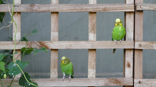 Birds Perched On A Wood With Climbing Plant