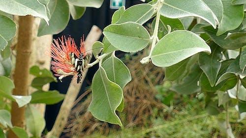 A Butterfly Fluttering On A Flower