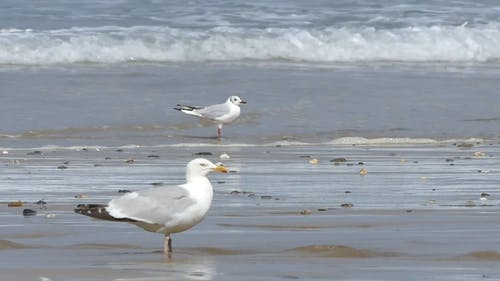 Sea Gulls On Shore