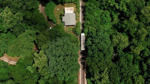 Slow Moving Train Travelling Across A Forest