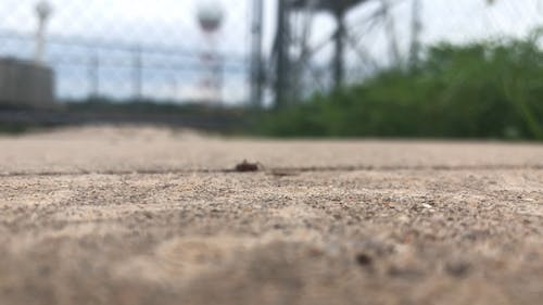 Macro Footage Of An Ant Crawling In And Out Of A Pavement Crevice