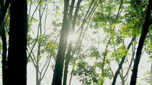 森の中の木々からのぞく日光
