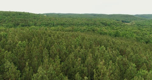 Aerial Footage Of A Forest