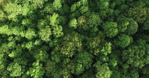 森林鸟瞰图