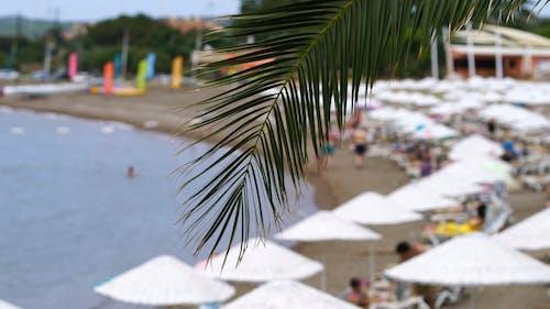 People Enjoying Summer At A Resort