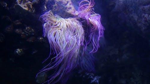 Sea Anemone Clinging On Rocks Underwater