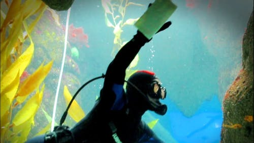 A Diver Cleaning The Glass Of An Aquarium