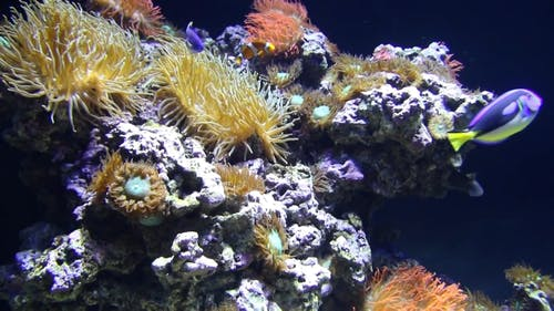 Fishes Circling Around Corals