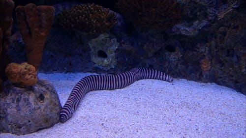 A Striped Ell In An Aquarium