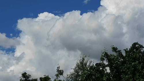 The Blue Skies Is Covered By Cotton Like Cumulus Clouds