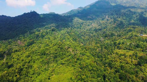 Aerial Footage Of Lush Vegetation Of A Mountain