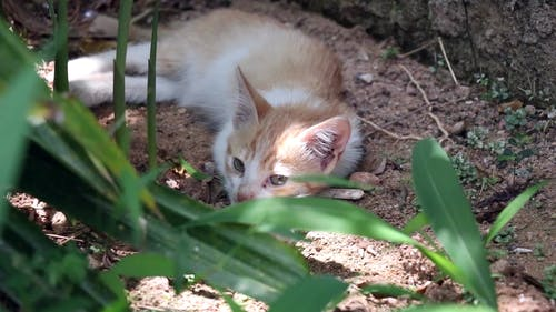 A Kitten Resting On The Ground