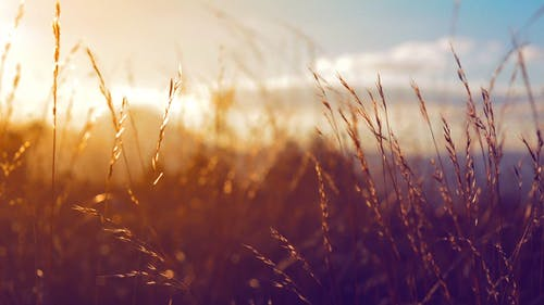 View Of Sunrise On A Wheat Field