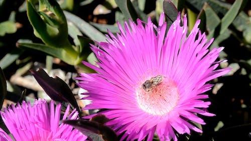 Bee Feeds On Flower Mectars