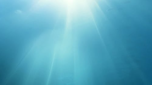 Underwater Footage Of Rising Bubbles