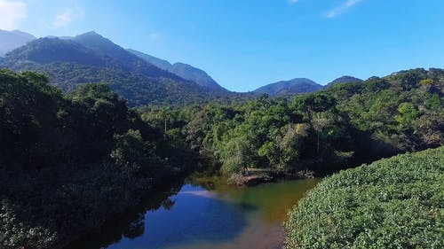 Luftaufnahme Einer Waldlandschaft