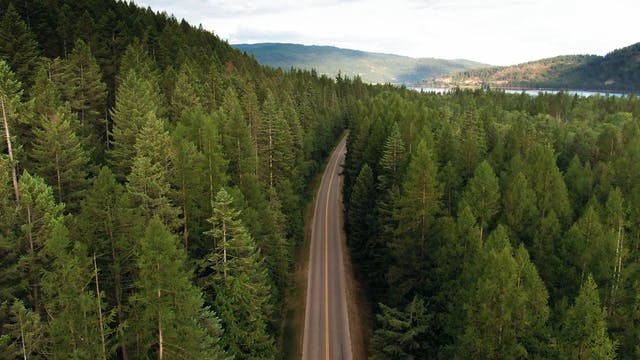 A Road In The Middle Of A Forest