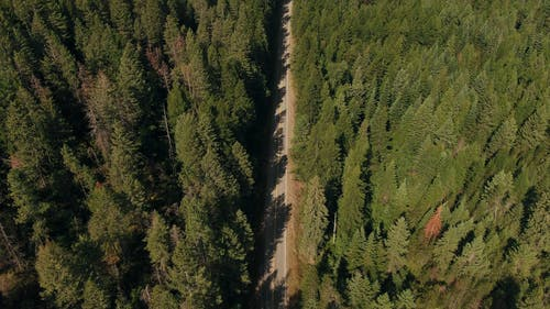 A Road Cuts Through A Forest