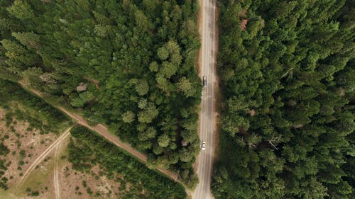 A Road Network Cuts Through A Forest