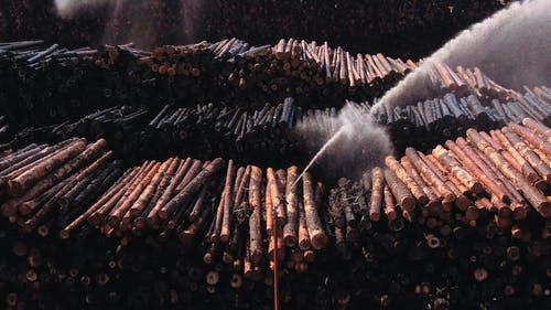 Stacks Of Raw Lumber Being Hosed Down With Water By A Mechanical Power Washer