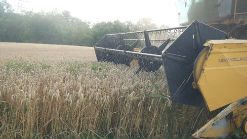 A Combine Harvester Machine Harvesting The Rice Field