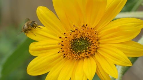 Bees Feeding On A Flowers Nectar