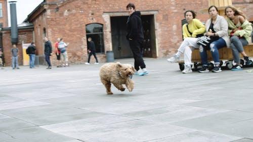 Brown Dog Running Free