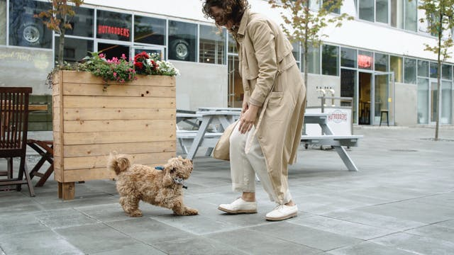 Dog Jumping Towards Her Master
