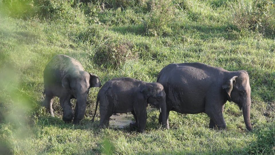 A Family Of Elephant Roaming At A Grassland