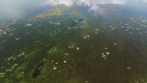 鬱鬱蔥蔥的土地包圍的水體的航拍