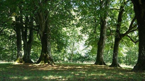 木の森の音や風