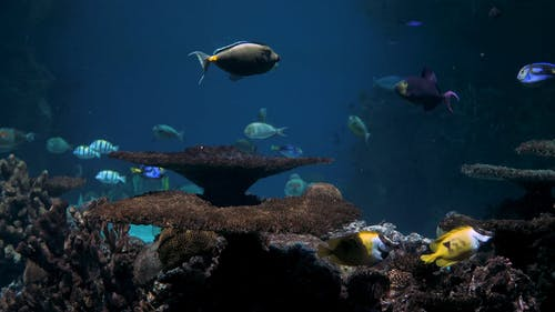 Different Kind Of Marine Life On Display In An Aquarium