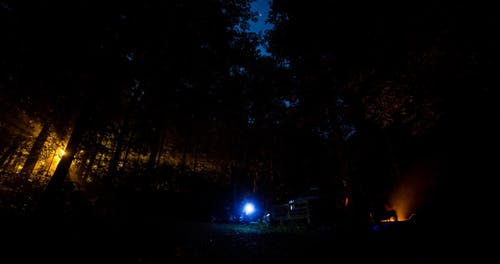 Forest At Night With People Camping