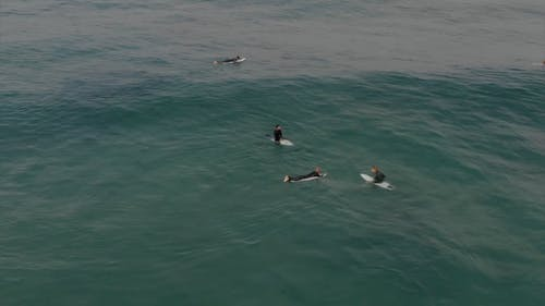 Aerial View Of Surfers Wading On Sea Water On Their Surfboards