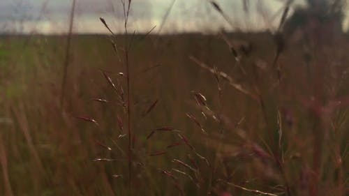 Person Walking Through A Field Of Wild Grass