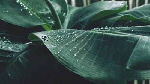 Water Droplets On A Leaf Of Plant