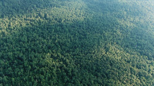 Drone Footage Of The Tree Canopies Of A Dense Forest