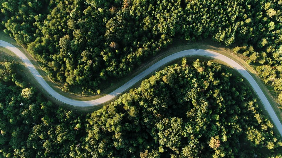 A Zigzag Road Across A Forest