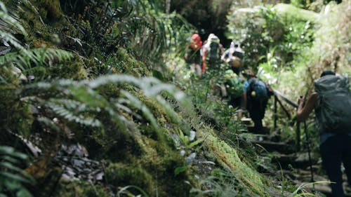 Hikers On A Trekking Adventure In A Jungle Forest