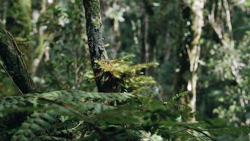 森の中の木の枝にしがみつく植物