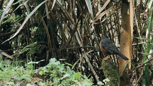 コケの石の上にとまる鳥