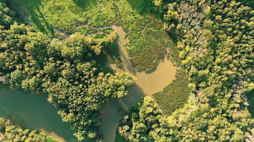 Demiryolu Yoğun Bir Ormanı Kesiyor