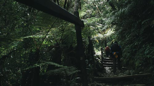 Group Of Men Trekking A Forest