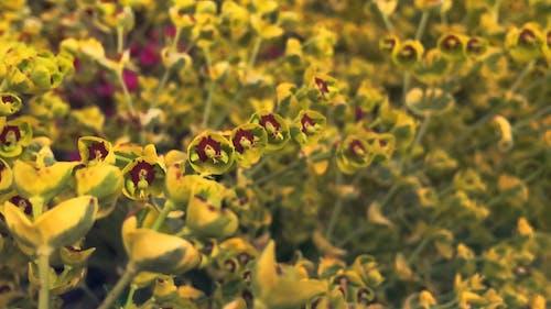 Farming A Cultured Flower