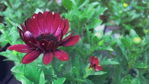 Red Flower In Focus